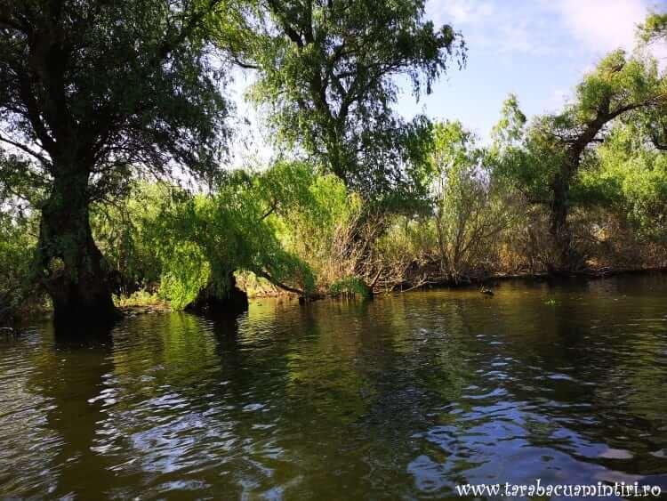 Canal Delta Dunării
