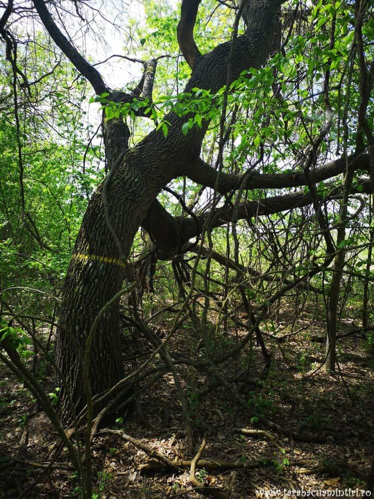 Pădurea Caraorman