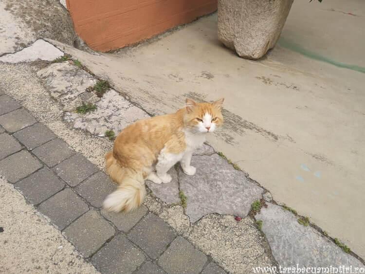 pisici Croația